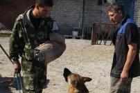 дрессировка собак в тюмени